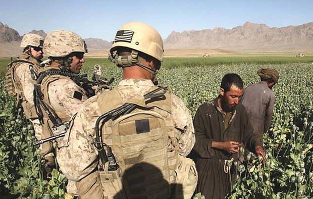 Талибы против наркотиков