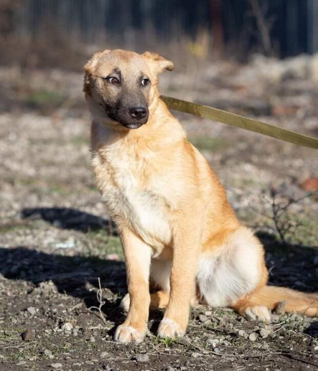 Запуганный щенок полгода не давался людям в руки волонтер, дворняга, собака, щенок