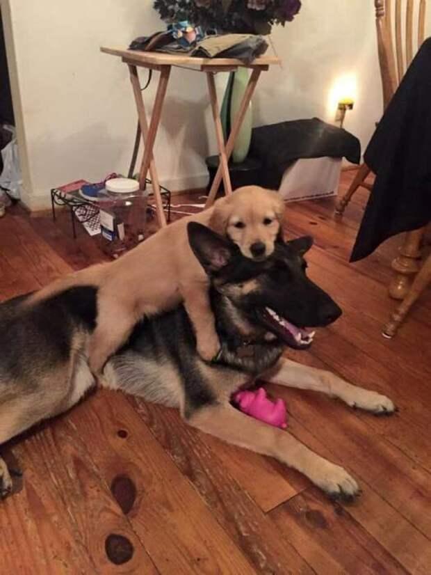 Собачий фотопозитив животные, пес, собака