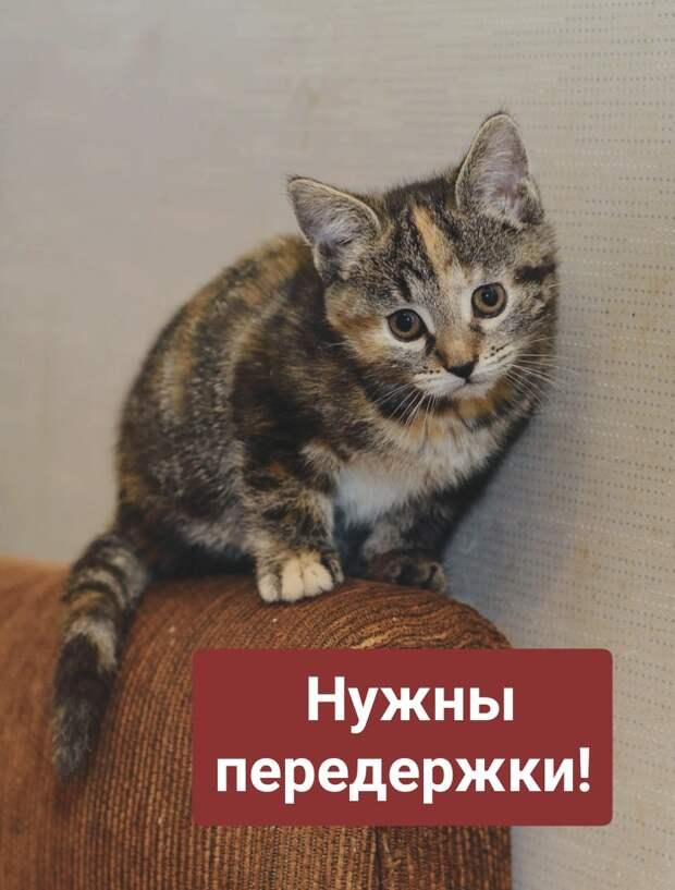 Очень, очень нужна ваша помощь! Любая!!!