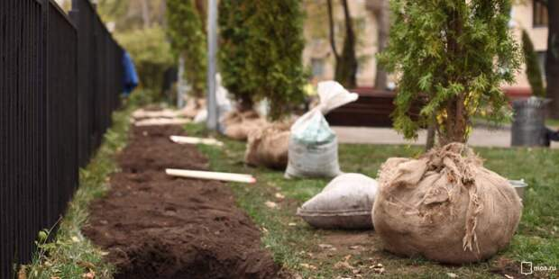 В сквере на Туристской деревья и кустарники высадят после благоустройства- префектура