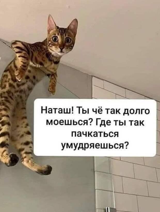 Возможно, это изображение (кот и текст «наташ! ты чё так долго моешься? где ты так пачкаться умудряешься?»)