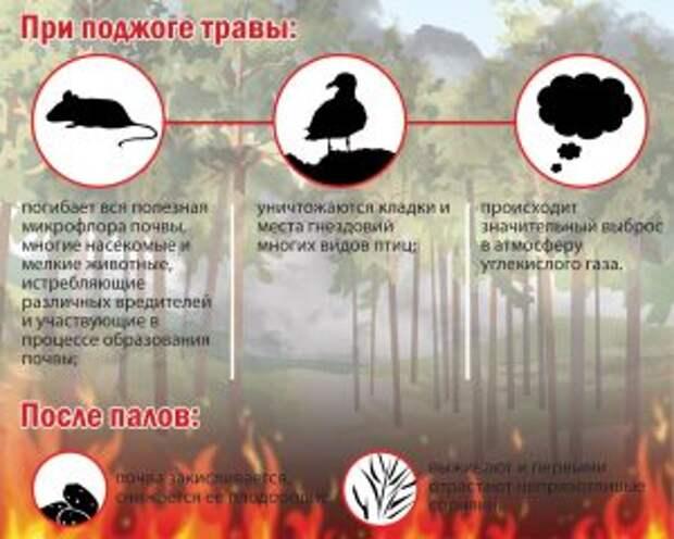 Поджигать сухую траву недопустимо — МЧС