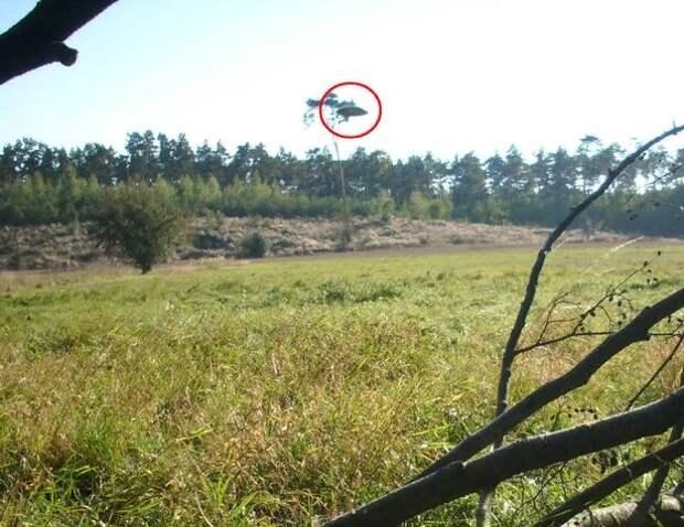 В Польше велосипедист сфотографировал НЛО-волчок