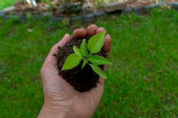 Посев семян лентой: лайфхак для дачников