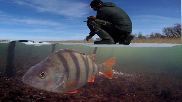 Весенняя рыбалка на льду, щука на жерлицы