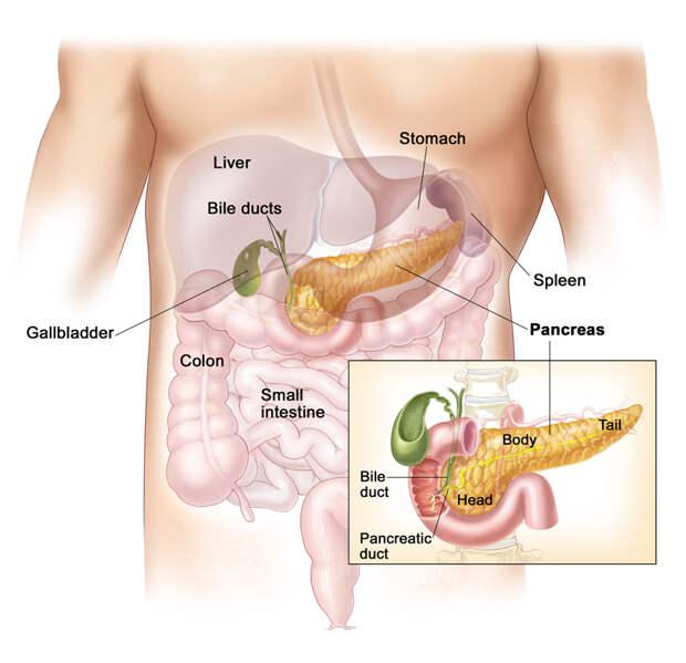 Диабет: ЗОЛОТЫЕ рецепты народной медицины