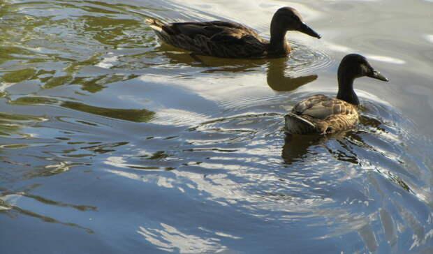 Летом на два с половиной месяца спустят воду в Городском пруду Екатеринбурга