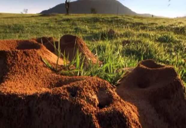 Учёные раскопали колоссальный подземный город муравьёв - видео-01