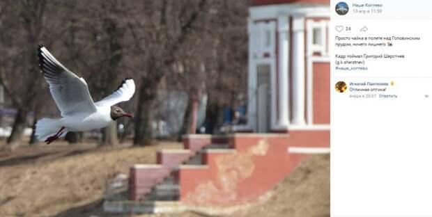 Фото дня: чайки парят над водой в Головинском