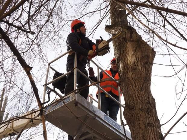 Во дворе дома на бульваре Яна Райниса удалили сухостойное дерево
