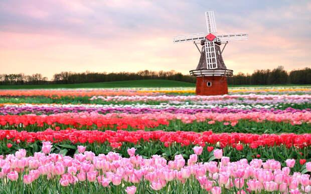 Немного о колониализме, Нидерландах и требованиях к России извиниться за сбитый Боинг.