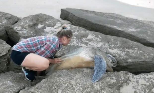 Огромная черепаха несколько часов пыталась выбраться из щели в скале пока ее не увидели люди