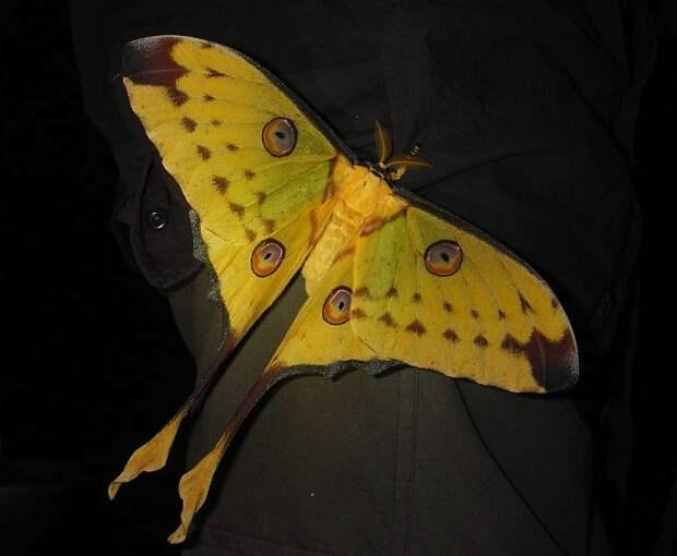 15 самых красивых бабочек на Земле, доказывающих, что природа – лучший художник