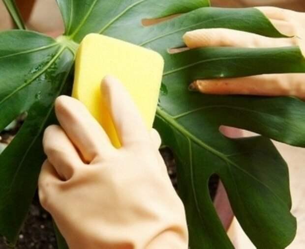 Страшная тайна о растениях