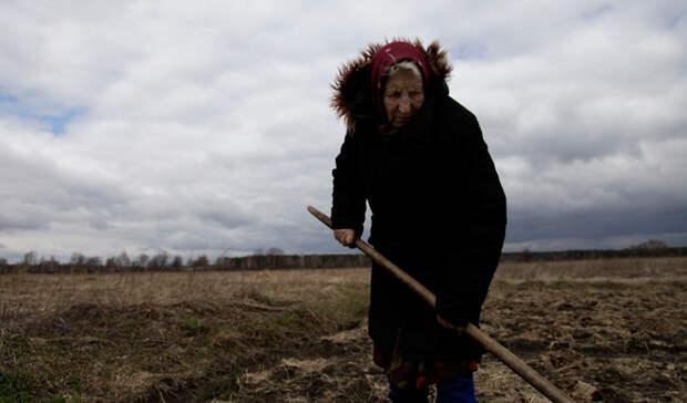 Огороды зоны отчуждения: что сегодня растет в Чернобыле
