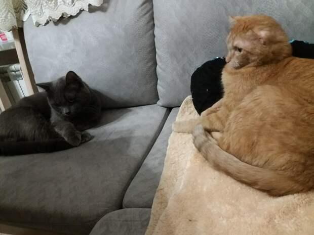 Серый кот прокрался в подъезд, чтобы погреться. Он плакал от голода, а жильцы хотели выгнать его прочь