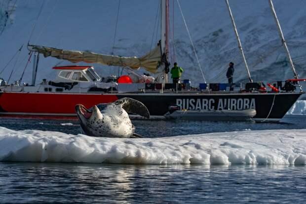 Прощание морского леопарда