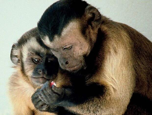 Деньги превратили обезьян в грабителей и проституток