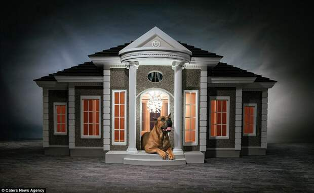 Being in the dog house needn't be a bad thing any more thanks to these opulent kennels which cost up to £150,000