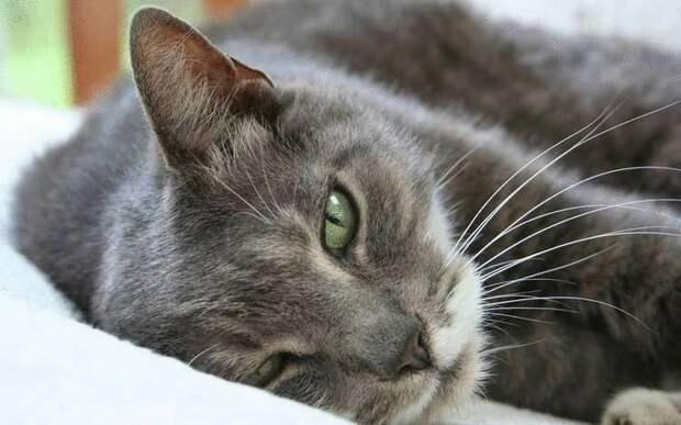 Несколько причин, почему нужно любить кота