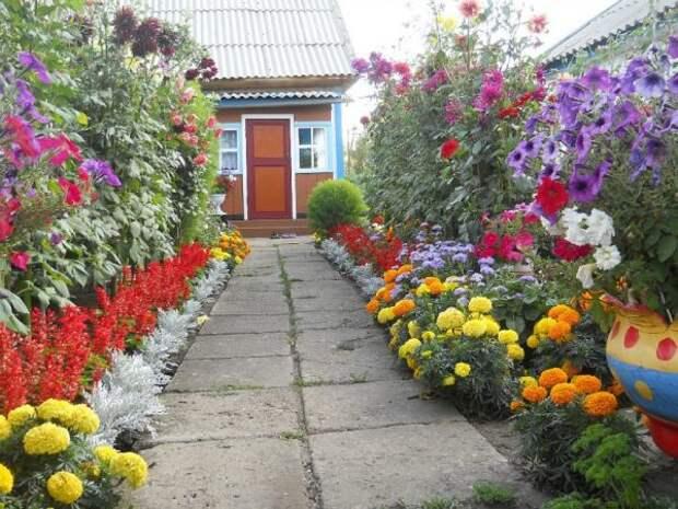 Яркие цветы вдоль дорожки