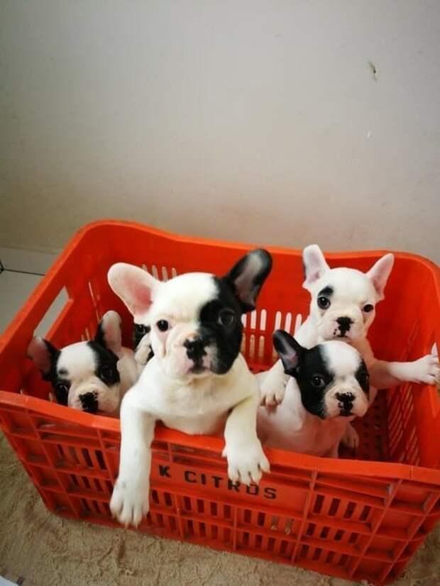 Мясо принес? А если найдем? друзья человека, животные, мило, очаровательно, собаки, собачья жизнь, фото, фотографии