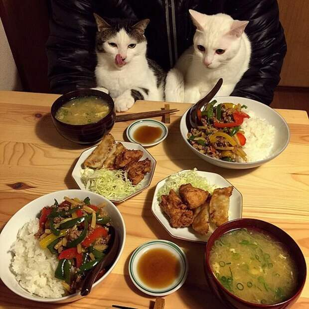 Вот, правильная комбинация — первое, второе, закуски, соус дегустация, еда, животные, кот, коты, позитив, реакция, юмор