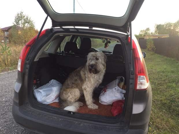 пес в багажнике
