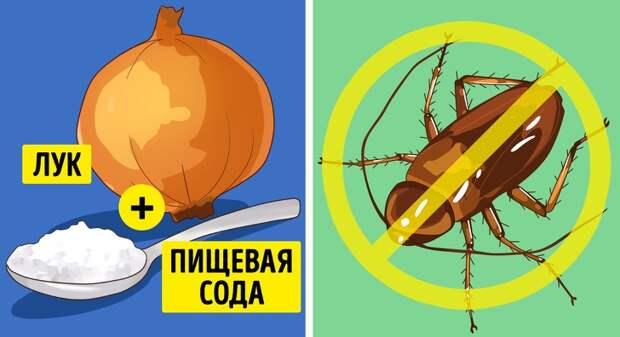 6 эффективных способов избавиться от насекомых в вашем доме