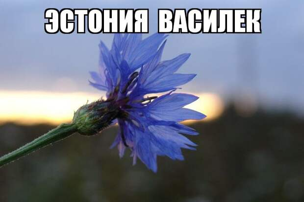 Цветы - национальные символы стран мир, растения, символы, страны, цветы