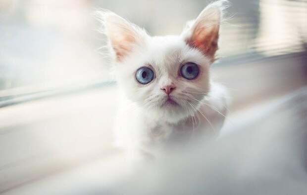Вся правда , о голубых глазах