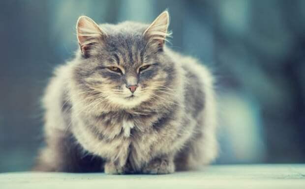 Чудесное преображение кота всего за полдня