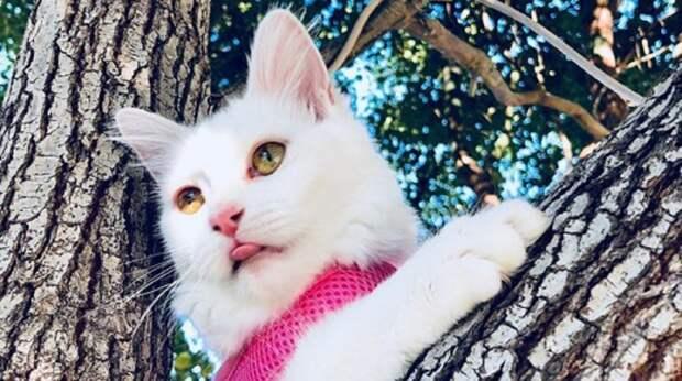 Подобрав на улице котенка, девушка решила отдать его кузине. Кроха завоевала ее сердце, несмотря на одну особенность