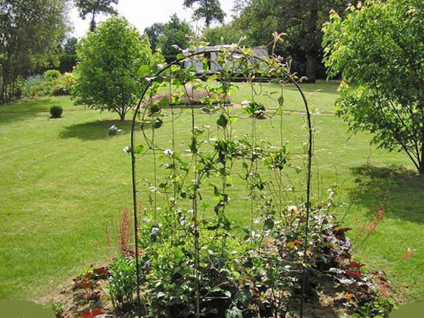 каркас для вертикального озеленения