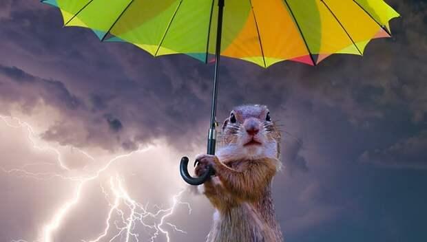«Желтый» уровень опасности погоды из‑за дождя объявили в Московском регионе на 3–4 июня