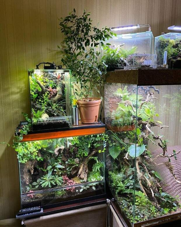 Зимний сад в «хрущевке». Как создать уголок тропического леса в малогабаритной квартире