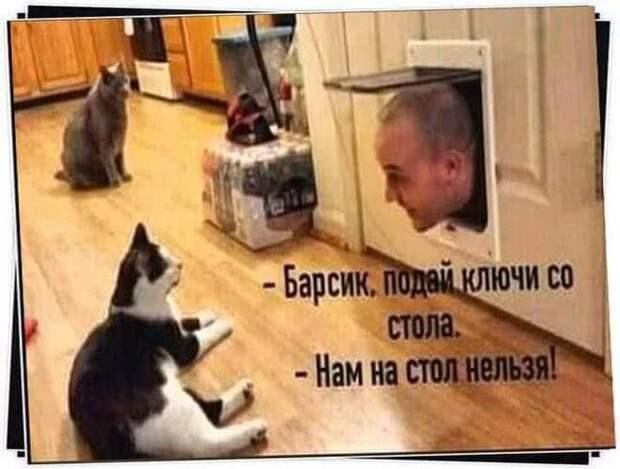 Возможно, это изображение (1 человек, кот и текст «-барсик. под ключи со стола. -нам на стол»)