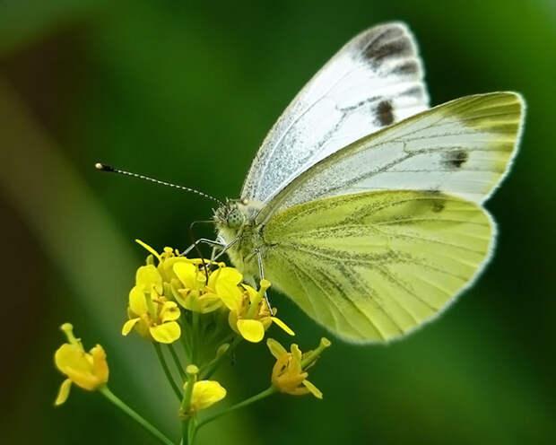 Бабочка и бабушка бабочка, старуха, бабка, жестокость