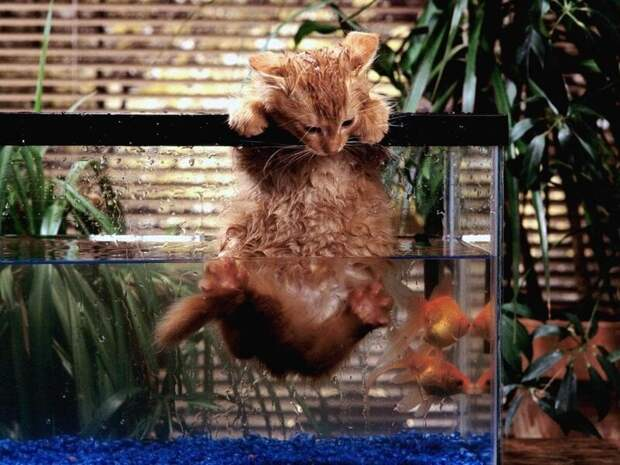 Рыбалка не удалась животные, забавно, кот, коты, кошка, подборка, прикол, юмор