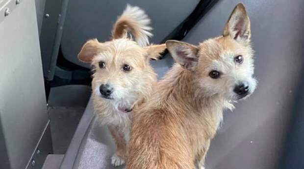 Кто-то выбросил двух собачек из дома и из своей жизни. Хорошо, что рядом были неравнодушные люди