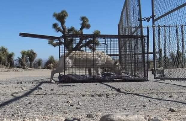 Ловушка ради спасения: собачку долго не могли поймать, потому что она перестала верить людям…