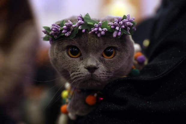 Участник выставки кошек в Анкаре