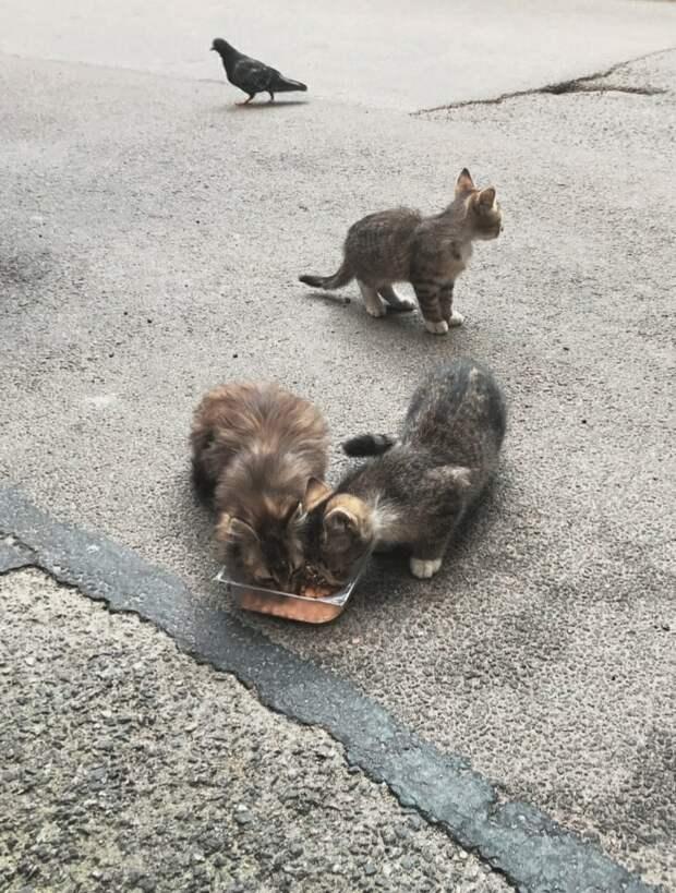Три славных малыша живут под машинами.. Есть выбор взять котят на время или пройти мимо..