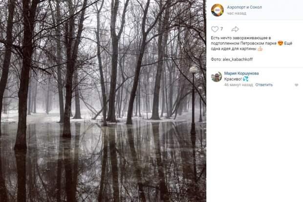 Фото дня: завораживающий снимок Петровского парка