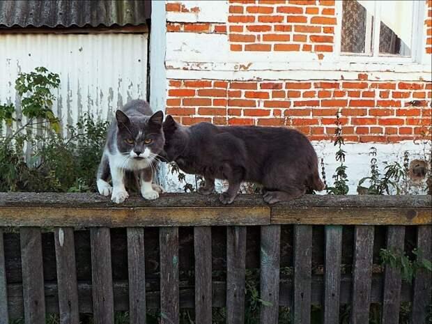 Братюни! город, домашние животные, забор, кот, кошка, село, улица, эстетика