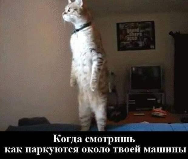 - А я свою ласково называю: зайка моя, рыбка моя, птичка моя...