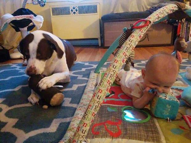 Правду говорят, что владение собакой готовит вас к рождению детей.