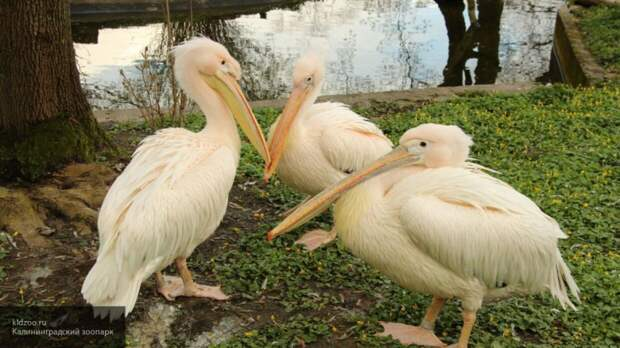 Охрана зоопарка в день убийства 18 птиц не провела обход из-за дождя в Калининграде