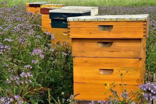 Пчеловоды завоевывают азиатский рынок